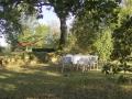 pigeonnier photos pour site (19).jpg